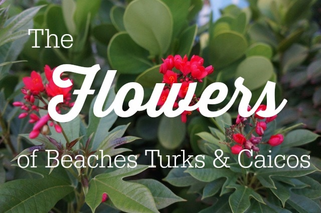 Flowers - Turks and Caicos