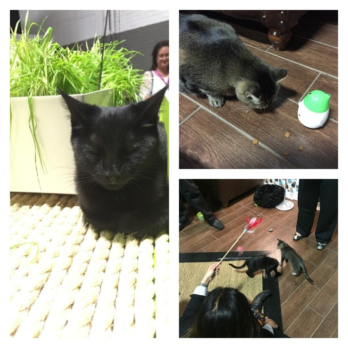 Purina Cat Environment #BetterWithPets