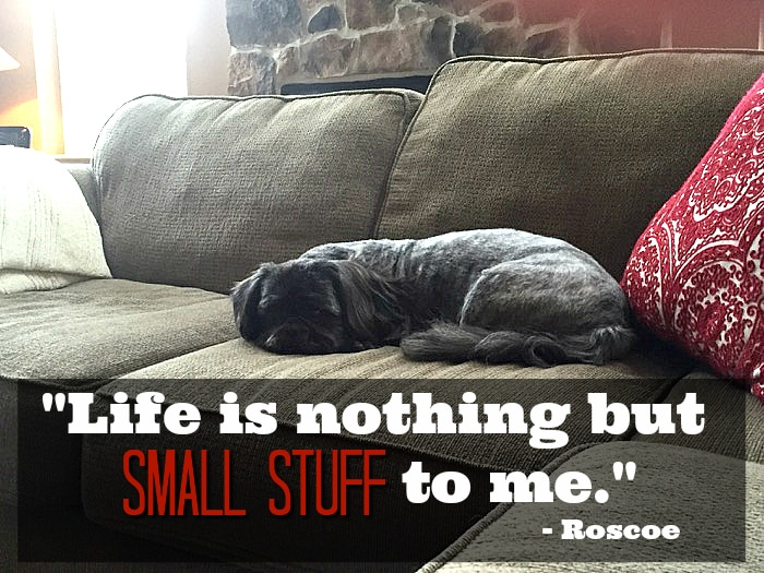 Roscoe doesn't sweat the small stuff