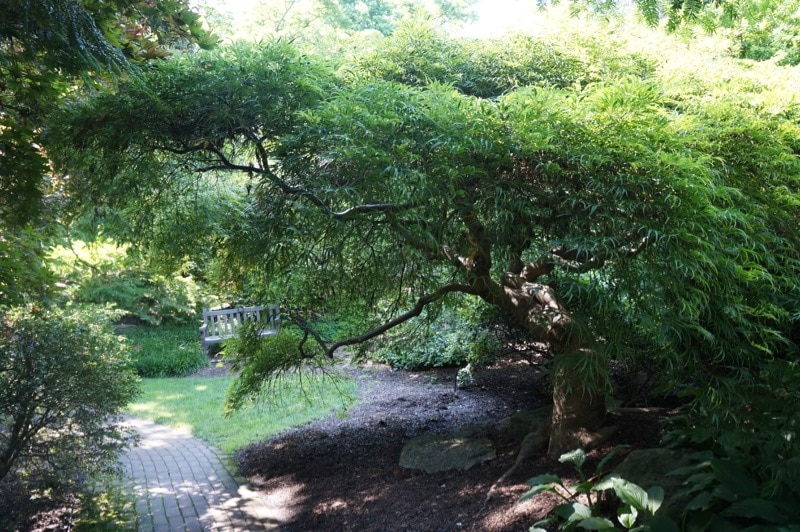 Japanese Garden at Hershey Gardens