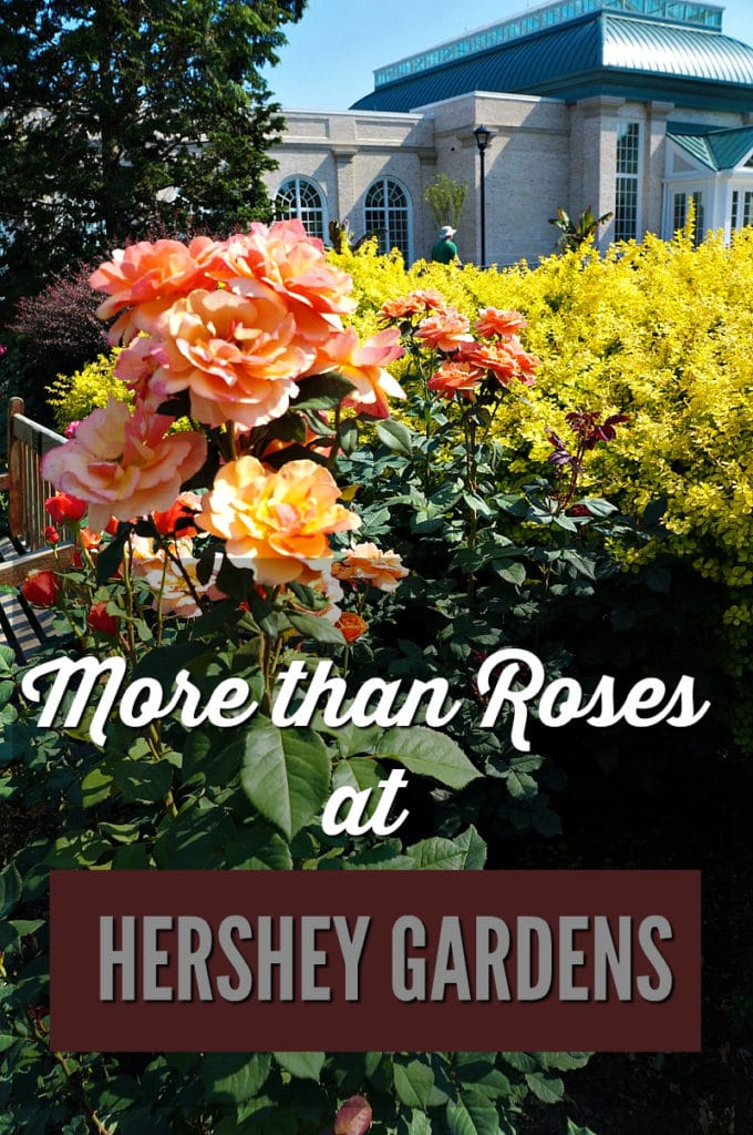 More than Roses at Hershey Gardens