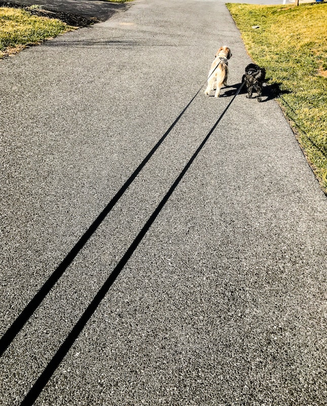 Going for a walk