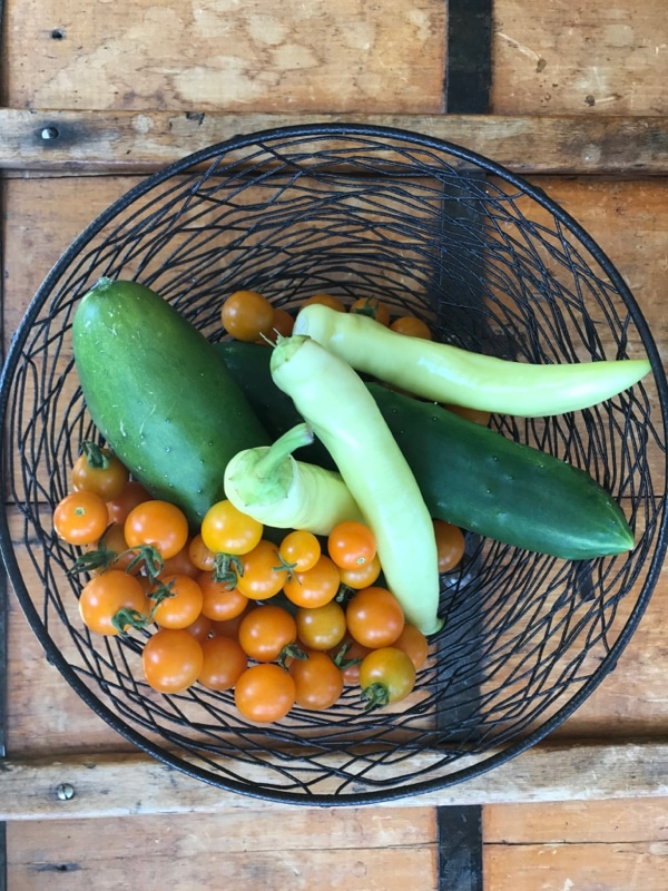 Our latest harvest