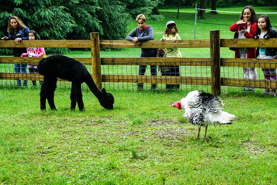 Petting zoo at Indian Echo Caverns