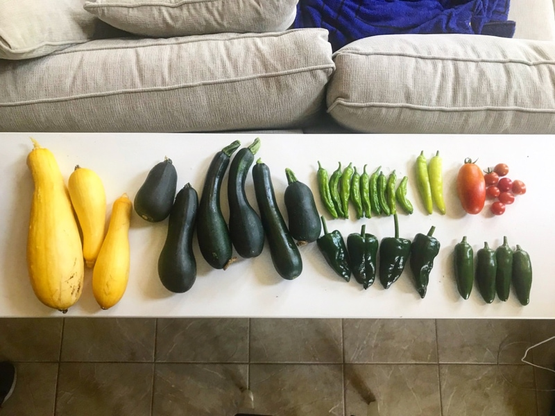 Our garden harvest this year