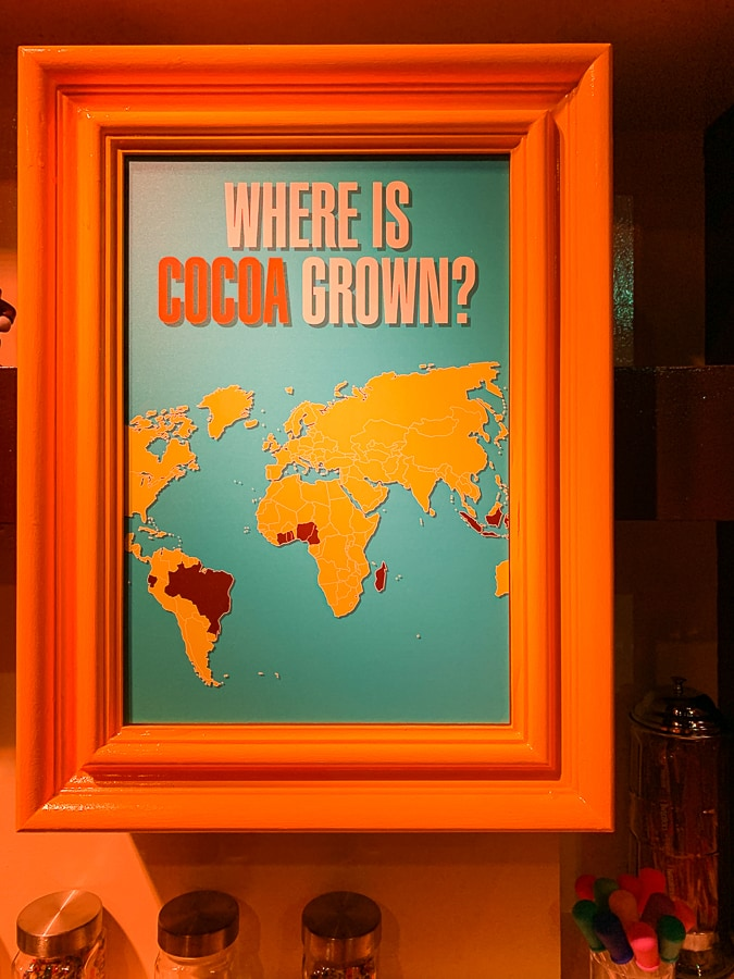 where is cocoa grown