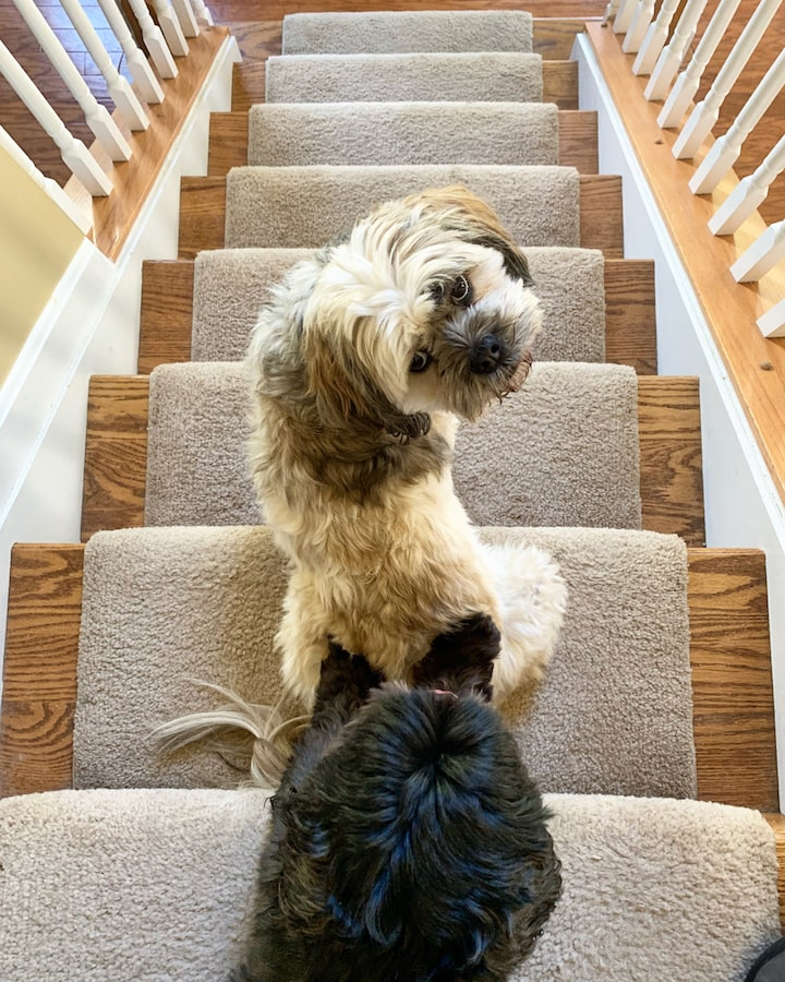 Roscoe and Layla on the stairs