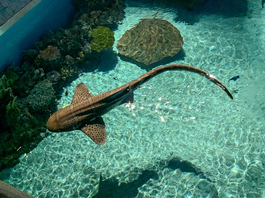 Nurse shark at the National Aquarium in Baltimore