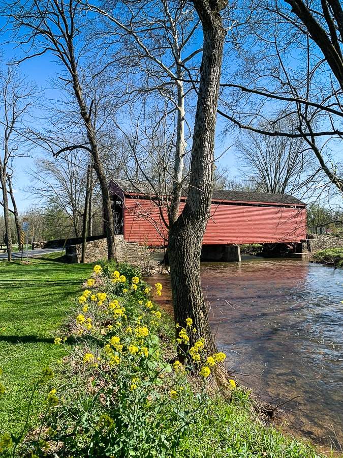 Flowers in bloom near Loys Station Covered Bridge