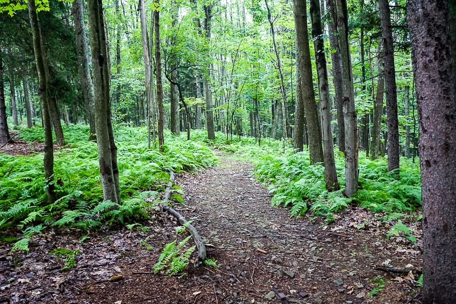Oak, maple, and hemlock were some of the trees spotted on the Fern Gully trail
