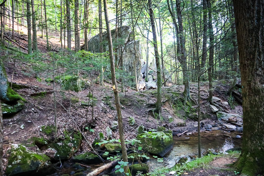 Woods at Frederick Watershed